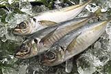 鮮魚遠海部写真1